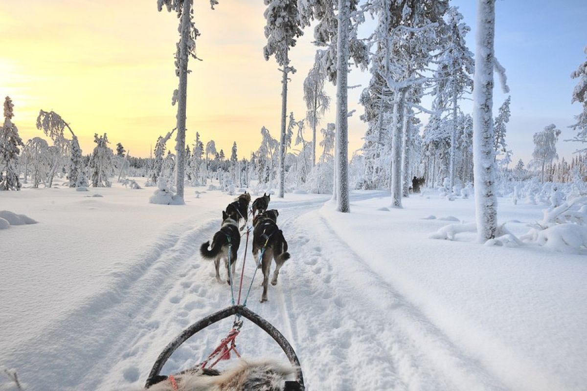 dog sleeding scandinavia